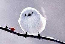 """Bird's"" the Word / Birds, birding, birdwatching, birdfeeders"