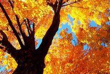 Immagini d'autunno