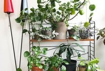Plant and design inspo from Plants by the Treetops Insta