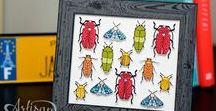 SU Beetles & Bugs