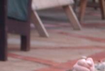 EU VISTO COLETES SALVA-VIDAS ATIVA! E você? / O uso do colete salva-vidas é obrigatório. Vista seu colete ATIVA e tire uma foto caprichada! Envie com nome e local onde foi tirada.  PARTICIPE!  A conscientização do uso do colete salva-vidas é muito importante e você pode fazer parte desta conquista!