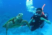 スキューバダイビング Scuba Diving / あそびゅー!スキューバダイビング