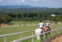 乗馬 HourseRiding / あそびゅー!乗馬体験