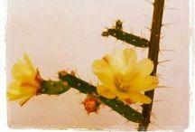 Pencas / Cactus / by Soledad Paredes