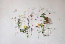 flowers / my herbarium