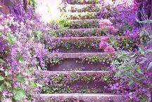 Fiori & Giardini