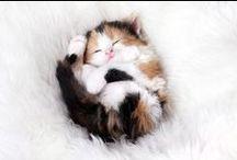 KISULI / Kuvia kissoista vaikka miten päin