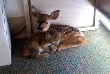 Animal cuteness . . .