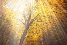 Inspirasjon skog/trær