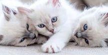 • roar • / Cute | Animals | Cute animals | Cats | Kitten | Cute cats | Pets | Pet | Adorable | Adorable animal | Adorable cat | Wild life
