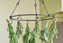 The Herb Garden / Everything on growing herbs in the garden!
