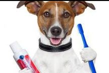 Pet Dentistry / Learn the latest news and advice about pet dentistry from veterinary specialists.