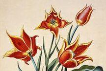 Тюльпаны / by Nat Matveeva