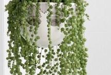 Gardening: Indoors and Houseplants