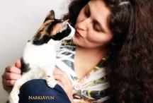 NarkiAyun Orientals & Siamese / My Orientals & Siamese cats