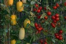 Garden design: fruit/veg/herbs / by Upcycled London