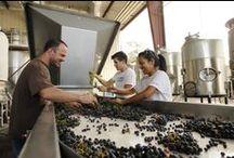 Fresno State Harvest Season
