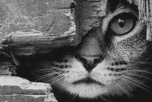 Kittycat ^.^