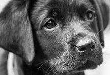 Puppies / by Martyna Krukowska