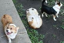 funny llamas and dogs that look like bread