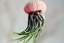 Flora / by Nina Poopsie
