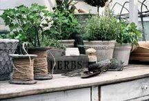 Gardening / Greenhouse & garden life (Lev Landlig)