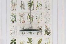 Botanical poster / Botanical poster - school posters Skoleplansjer av blomster