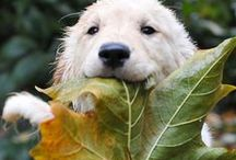 Animals / cute, fascinating, funny  / by Julia vom Bovert