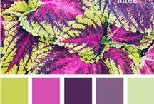 Pinta y colorea. / Paletas, tonos y combinaciones.