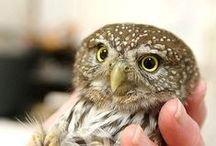 an owl brings happiness