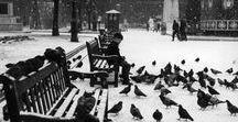 alterego | Pigeon Queen