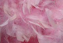 aes | Pink Cloud