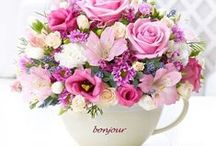 Flowers / Many different kinds of flowers and beautiful white roses pictures.... <3