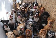 For the love of dogs / They motivate us to play, be affectionate, seek adventure and be loyal. - Tom Hayden.