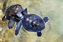 Turtle, my friend :)