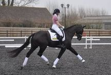 Dressage Blackberry. Rubinero x Negro / http://djdressage.co.uk/ Dressage, training, bling, competitions, horses