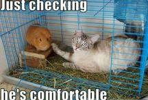 Ahhh, Animals