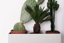 growing / Interieur-planten