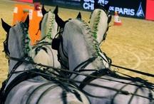 2012 - Paris Cup - Team Thiriez / Photos du Team Thiriez à la Paris Cup 2012 avec Dominique et Arnaud comme grooms. Crédit photos : Aurore Lefebvre Mermin