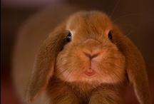 ...chibi cuteness *.*