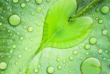 I like the colour Green / by Janet Window