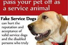 Pets and Pet Health
