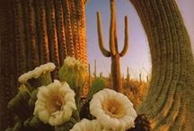 Travel Arizona with Highlights on Tucson / by Celeste W