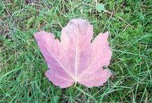 Une journée d'automne / Plaisirs d'automne
