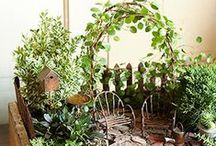 Mini gardens and  miniature plants / Tutorials, ideas, suggestions and everything you need to know about when thinking of building miniature and fairy gardens.