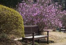 PODRÓŻE - JAPONIA / A few days too little to enjoy the eyes of a blossoming cherry...