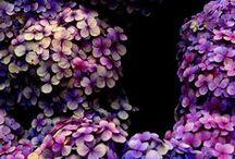 Petals <3