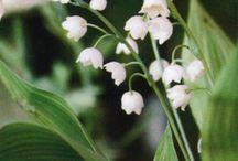 limelight | flora