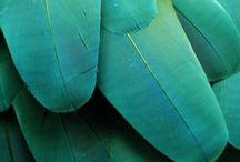 limelight | blue + green