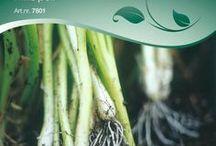 Grönsaker 2014